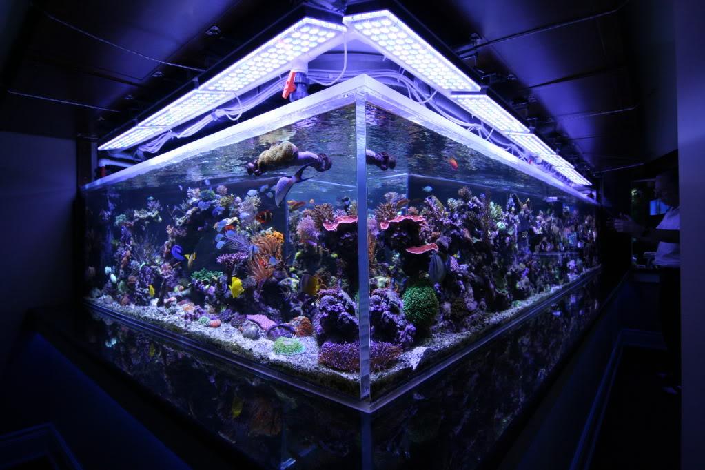LED-aquarium-lights