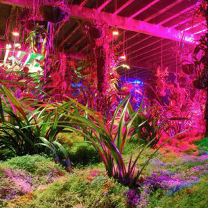 grow_light_moss